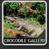 CrocodileIcon